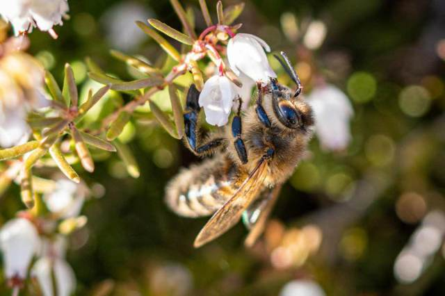 unbelievable facts about bees