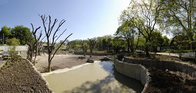 Bullenbereich in der Außenanlage mit eigenem Pool (Foto: Zoo Basel)