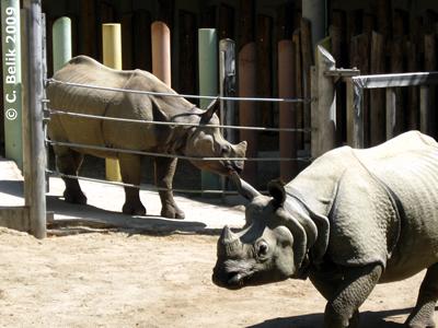 Sundari und Jange, 12. Juni 2009