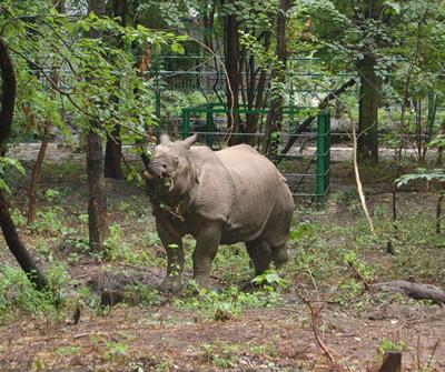 Nepal, im August 2006 (Foto: Sóstó Zoo)