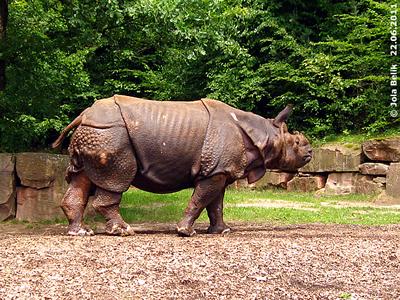 Ropen, Tiergarten Nürnberg, 22. Juni 2011