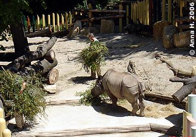 Sundari in der Außenanlage, 27. Mai 2006
