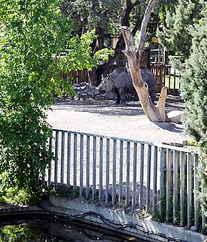 Batschii in der Außenanlage, 19. Mai 2010