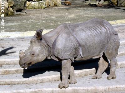 Sundari im Tiergarten Schönbrunn, 3. März 2010