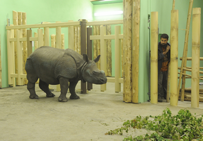 Manjula in der Innenanlage, 1. Juni 2010 (Foto: Zoo Pilsen)