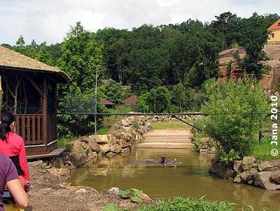 Beni im Teich, links Besucherkanzel, 6. Juli 2010