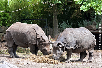 Fanindra (li) und Namaste (re), 29. Juli 2010