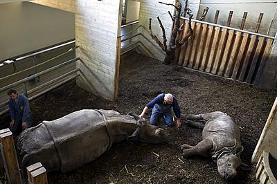 Mama Ellora (li) und die kleine HEnna (re) mit ihren Pflegern beim Training, 7. April 2011 (Foto: Zoo Basel)