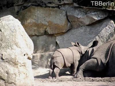 Du, Mama, ich mag kuscheln! Baby Aruna mit Mama Betty, 2. September 2011
