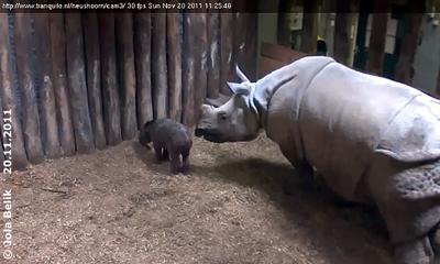 Saar und ihr Baby, 36 Stunden alt, 20. November 2011