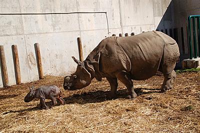 Mama Shiwa und ihr Söhnchen Tuto, eine Woche alt, 15. Februar 2012 (Foto: Terra Natura Benidorm)