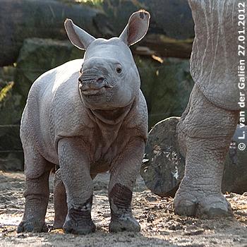 Ein absolut entzückendes Mäuschen! Baby Sunanda, 10 Wochen alt, 27. Jänner 2012