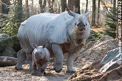 Sunanda und Mama Saar, 27. Jänner 2012