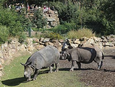 Baabuu und Manjula