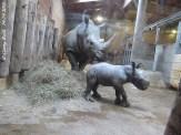 Tamu und Hörnchen