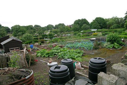 allotment getting started rhs