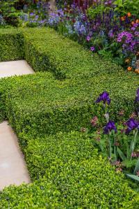 Garden design: formal garden plants / RHS Gardening