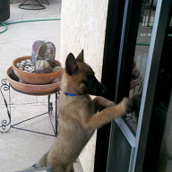 """Hey guys, Let me IN!"" Romeo wasn't taught to use the dog door until he was about seven months old."