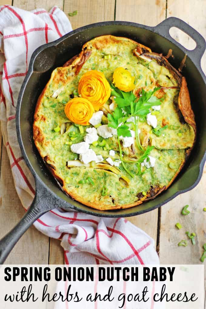 Simple, Spring onion dutch baby with herbs and goat cheese recipe! This savory dutch baby is perfect for that spring vegetarian breakfast or brunch. SUPER GOOD! // Rhubarbarians