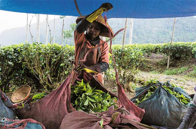 經典雜誌【茶域經緯】一杯茶的代價 茶壺背後的世界