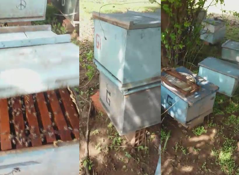 Colmeias foram envenenadas na localidade Lazam Velha, zona rural de Monsenhor Hipólito