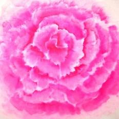 roos 50 bij 50 zonder zeefdruk 11