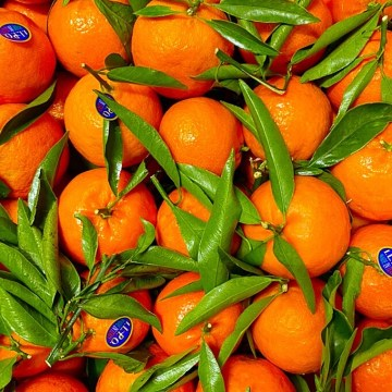 clementine calabresi italiane senza semi grosse