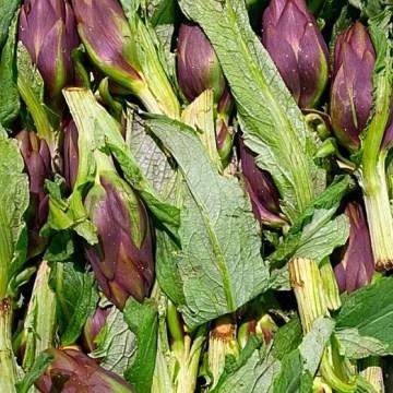 carciofini sardi primo fiore