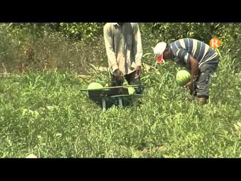 Els socialistes de la Ribera Alta demanen més mesures per defensar l'agricultor de la comarca