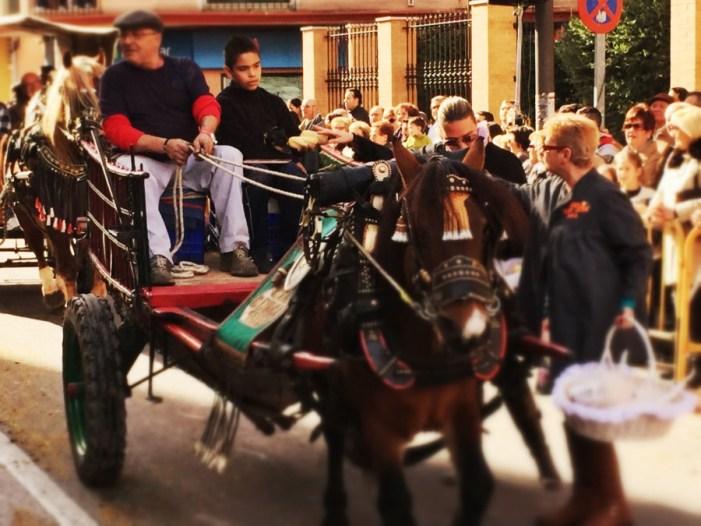 Sueca celebra la festivitat de Sant Antoni Abat