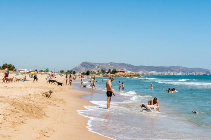 Ple absolut en la platja per a gossos de Cullera durant el primer estiu