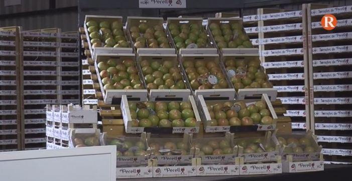 El primer lot de tomaques de la temporada de El Perelló es subhastat per 1.200e