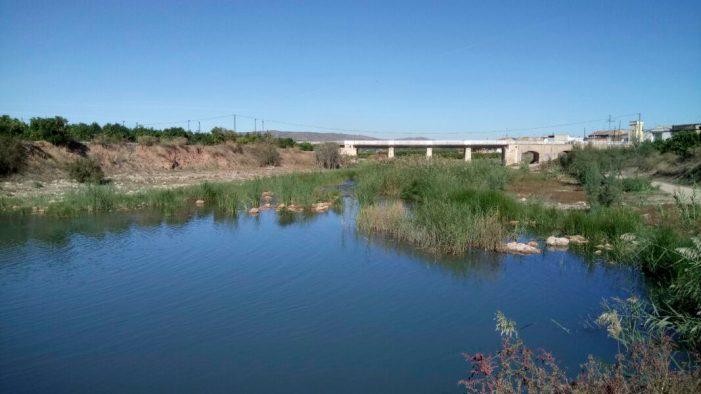 Càrcer plantarà espècies autòctones en perill d'extinció en el llit del riu Sellent