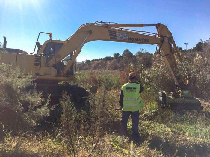 Càrcer inicia la recuperació del llit del riu Sellent amb la instal•lació d'espècies protegides