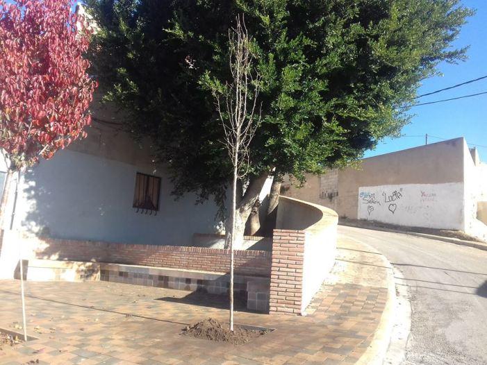 Un total de 234 arbres s'han repartit per tota la ciutat d'Alzira