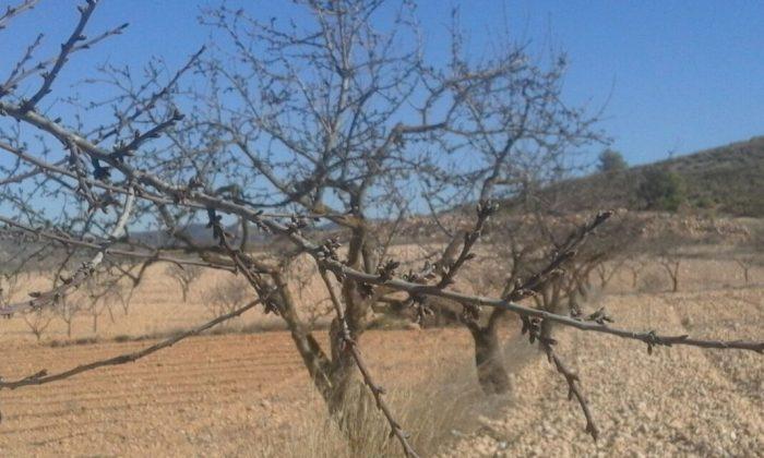 L'eliminació de l'ajuda a la superfície de fruita seca suposaria una pèrdua d'al voltant de 600.000 euros