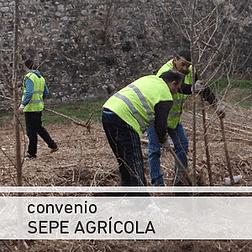 Alzira amplia un mes més els contractes dels treballadors agrícoles del SEPE