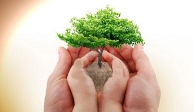 Escolares de Sollana plantarán los árboles que perdió l'Albufera de Valencia