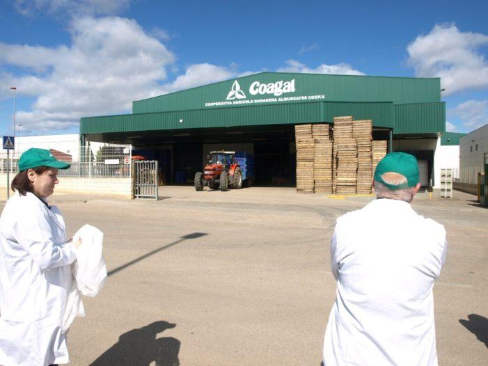 Almussafes homenatjarà als empleats i empleades de la cooperativa agrícola local