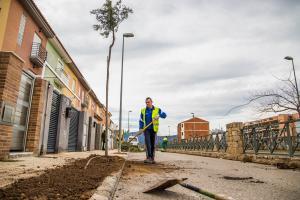 Cullera substituïx els arbres del Bulevard per uns altres que generen menys brutícia