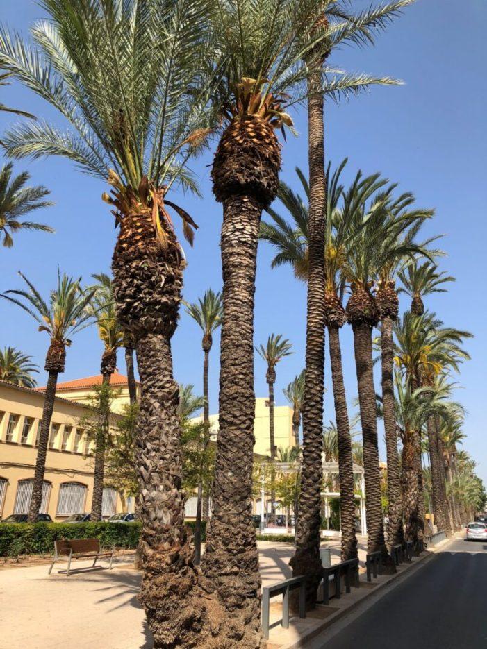 L'Ajuntament d'Algemesí arriba a un acord amb l'empresa Vialterra Medi Ambient per a mantenir l'arbrat singular catalogat de la ciutat