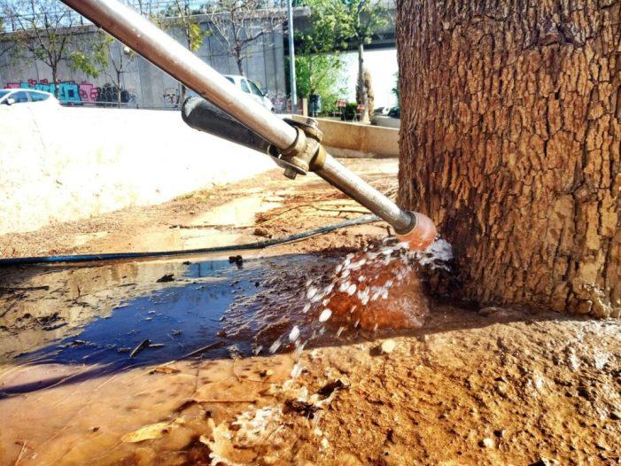 La Brigada Municipal d'Obres de Burjassot neta i aplica pasta cicatritzant als arbres danyats per oli de motor
