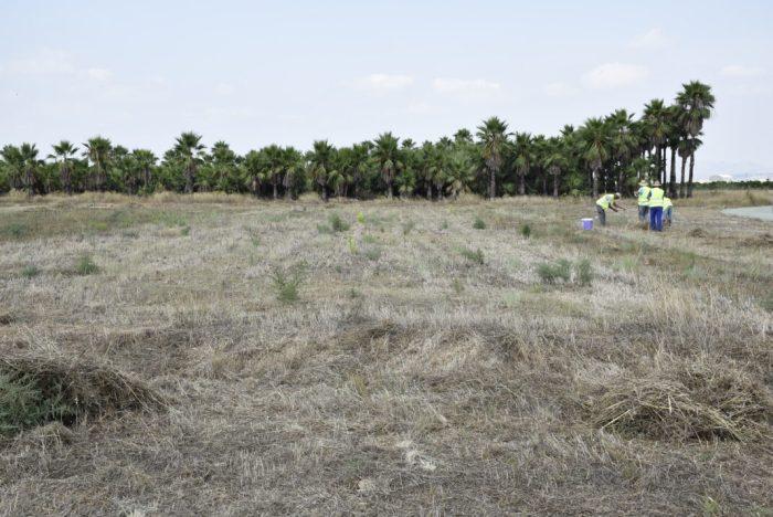 L'Ajuntament de Carlet contracta durant els mesos d'estiu 79 peons agrícoles per a realitzar diverses actuacions de neteja al terme municipal.