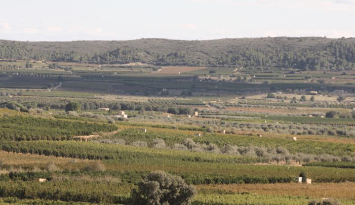 Turís acollirà en 2019 la primera demostració per a cultius especials de l'Associació Nacional de Maquinària Agropecuària, Forestal i d'Espais Verds