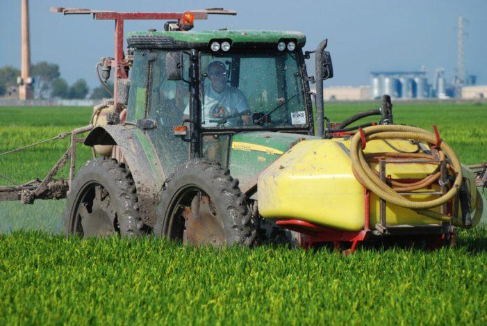 LA UNIÓ de Llauradors demana a Luis Planas que pressione a la Unió Europea per a activar la clàusula de salvaguarda i frenar les importacions d'arròs de Cambodja i Myanmar