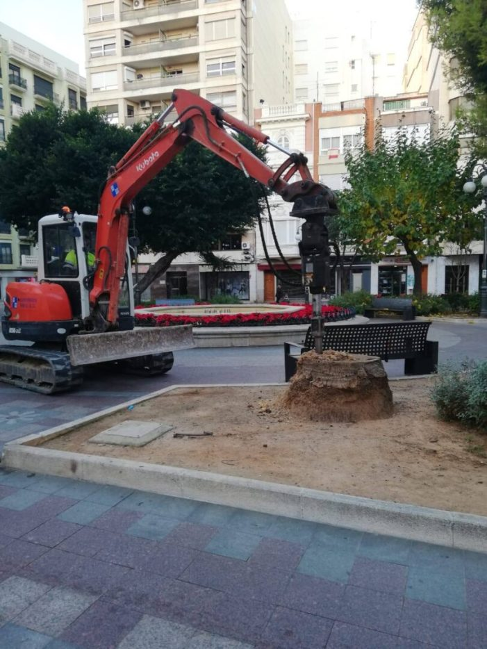 La Regidoria de Gestió Urbanística retira les restes d'arbres secs de la ciutat d'Alzira