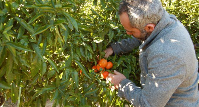 LA UNIÓ de Llauradors eleva la crisi citrícola a l'àmbit estatal i europeu i convoca a una reunió urgent a totes les Organitzacions Professionals Agràries, cooperatives i exportadors