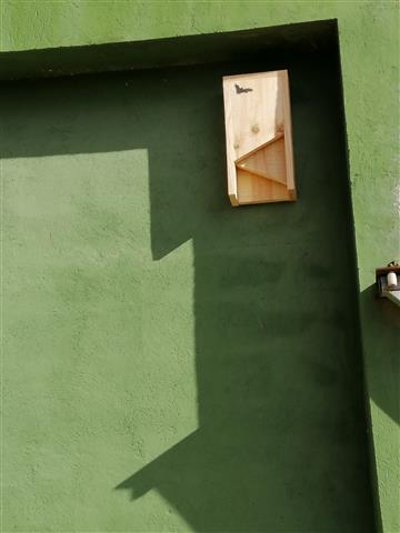 Ratpenats per a controlar la població de mosquits a Cullera