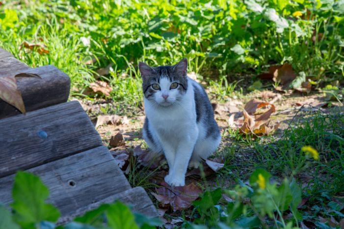 Els gats de Mislata estrenen casa