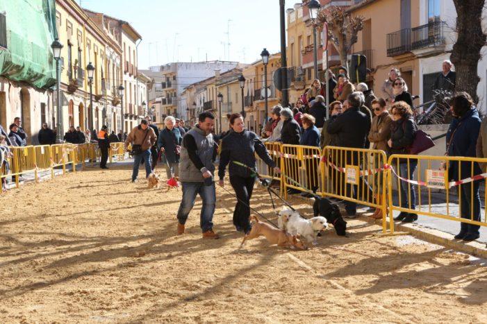 L'Ajuntament de Godella recorda l'obligatorietat de censar les mascotes